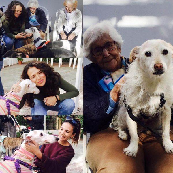 Visita de perros a la residencia Aurora en Sevilla